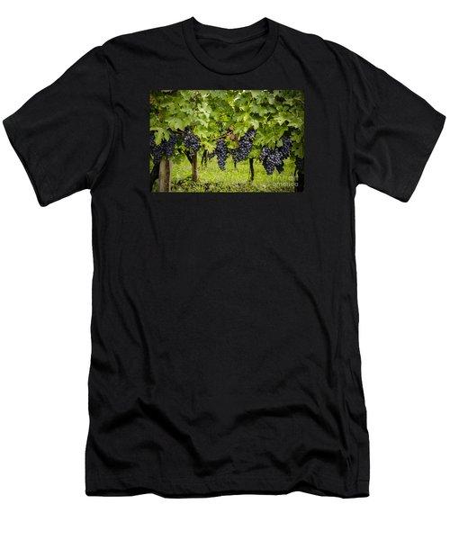 Chardonnay Grape Cluster Men's T-Shirt (Athletic Fit)