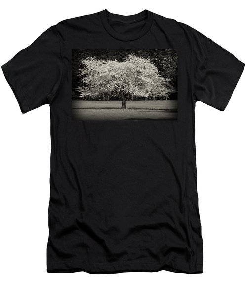 Cherry Blossom Tree - Ocean County Park Men's T-Shirt (Athletic Fit)