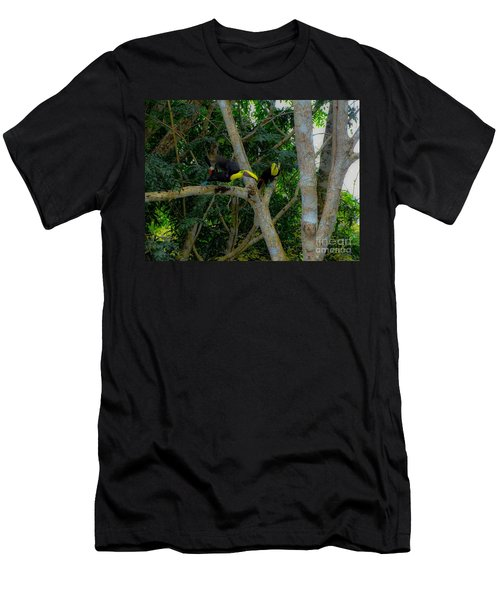 Chestnut-mandibled Toucans Men's T-Shirt (Athletic Fit)