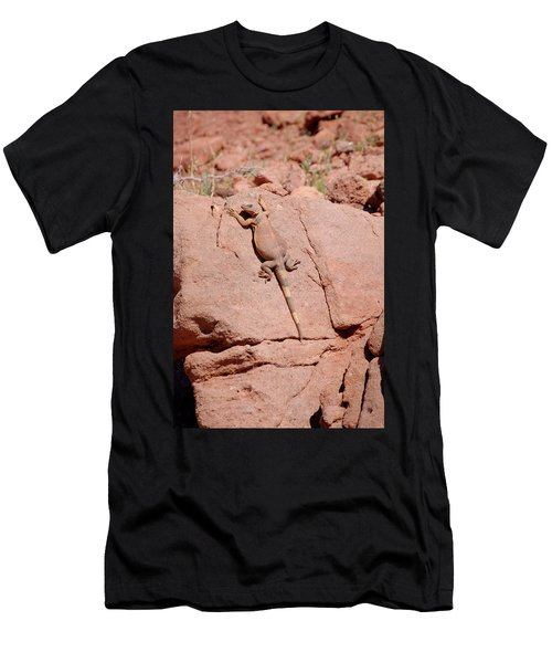 Chuckwalla, Sauromalus Ater Men's T-Shirt (Athletic Fit)