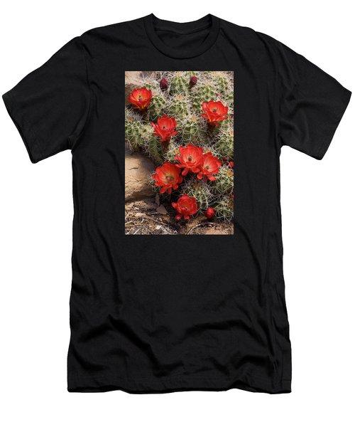 Claret Cup Cactus Men's T-Shirt (Athletic Fit)