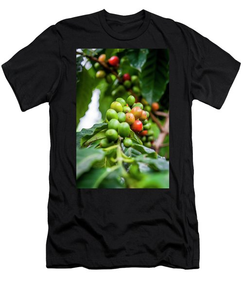 Coffee Plant Men's T-Shirt (Athletic Fit)