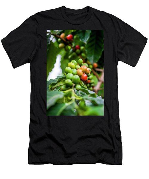 Coffee Plant Men's T-Shirt (Athletic Fit)