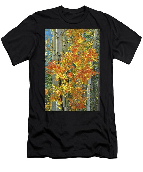Colorful Aspen Along Million Dollar Highway Men's T-Shirt (Athletic Fit)