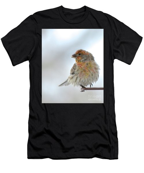Colorful Finch Eating Breakfast Men's T-Shirt (Athletic Fit)