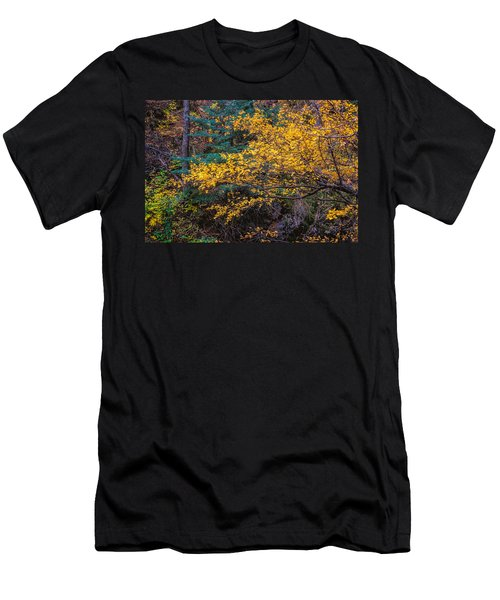 Colorful Trees Along The Creek Bank Men's T-Shirt (Athletic Fit)