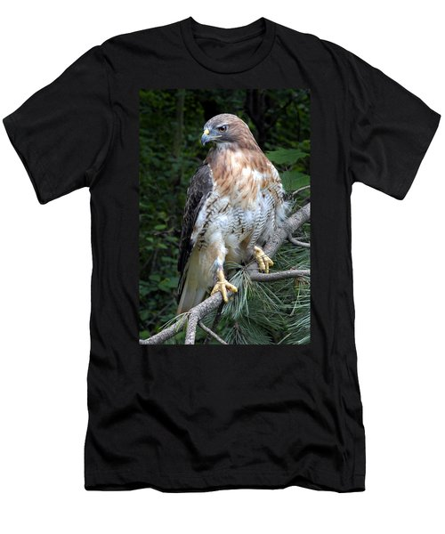 Coopers Hawk Men's T-Shirt (Slim Fit) by Dave Mills