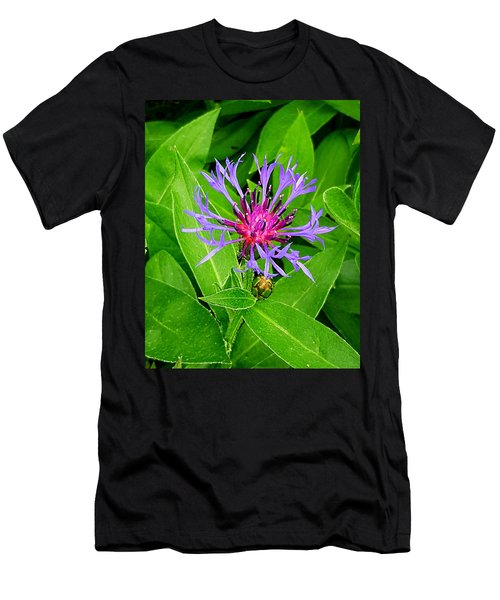 Centaurea Montana Men's T-Shirt (Athletic Fit)