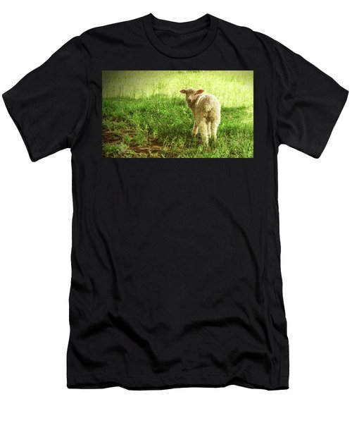Cotswold Sheep Men's T-Shirt (Athletic Fit)