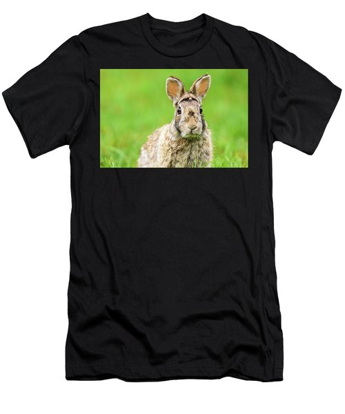 Cottontail Rabbit Men's T-Shirt (Athletic Fit)