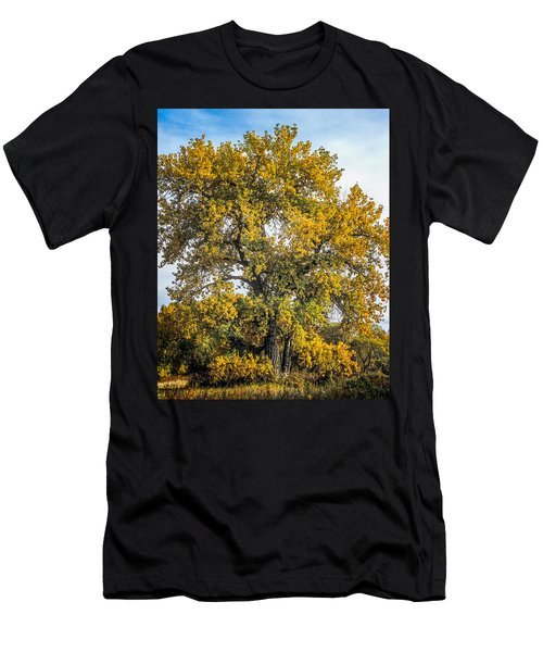 Cottonwood Tree # 12 In Fall Colors In Colorado Men's T-Shirt (Athletic Fit)