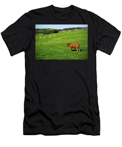 Cow In Pasture Men's T-Shirt (Athletic Fit)
