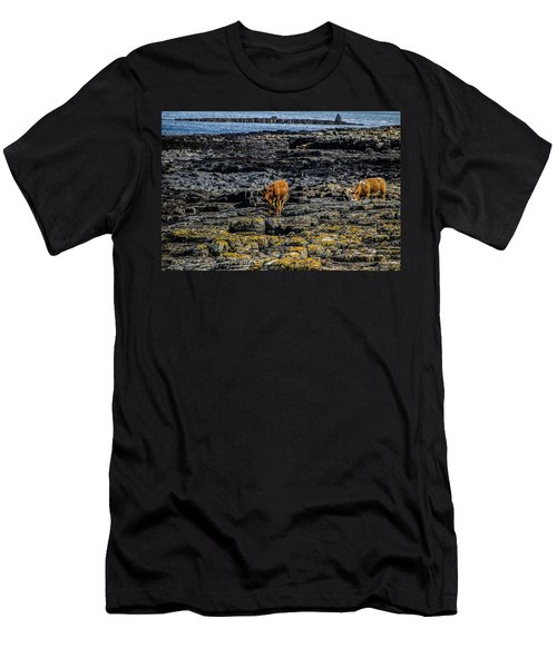 Cows On The Rocks Men's T-Shirt (Athletic Fit)