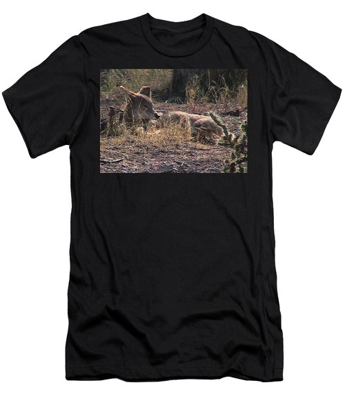 Resting Coyote Men's T-Shirt (Athletic Fit)