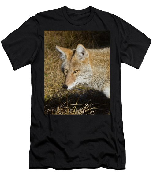Coyote In The Wild Men's T-Shirt (Athletic Fit)