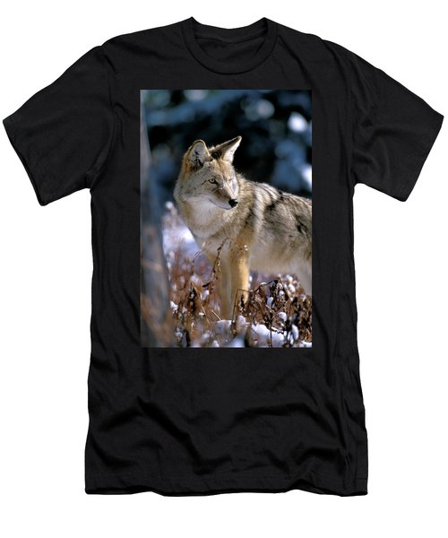 Coyote In Winter Light Men's T-Shirt (Athletic Fit)