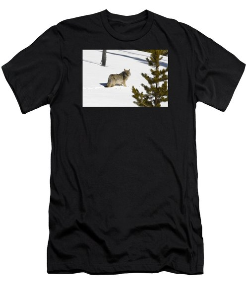 Coyote In Winter Men's T-Shirt (Athletic Fit)