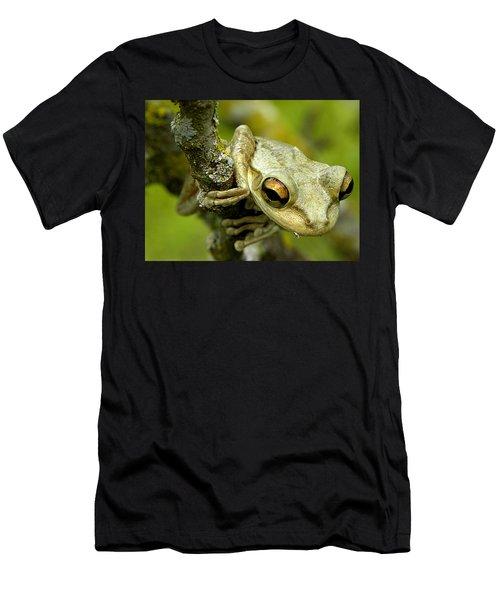 Cuban Tree Frog  Men's T-Shirt (Athletic Fit)
