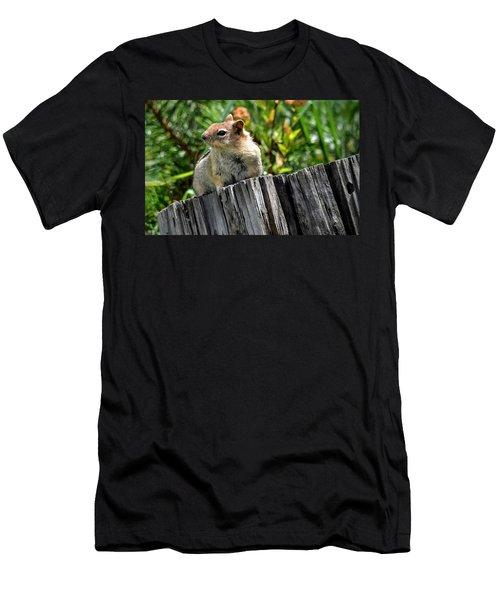 Curious Chipmunk Men's T-Shirt (Athletic Fit)