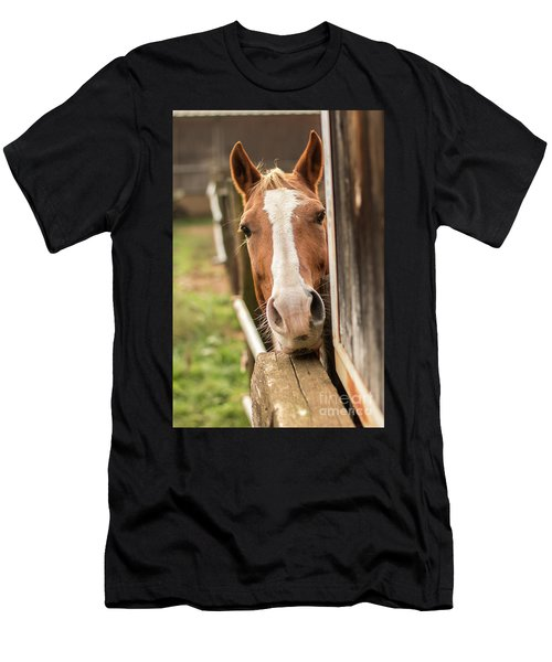 Curious Horse Men's T-Shirt (Athletic Fit)