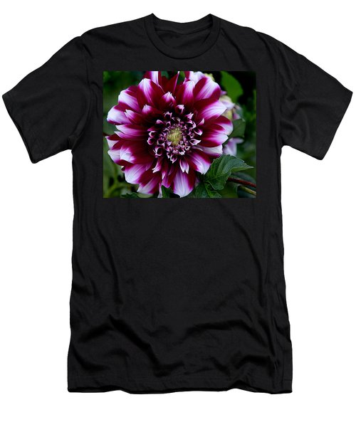 Dahlia Men's T-Shirt (Slim Fit)