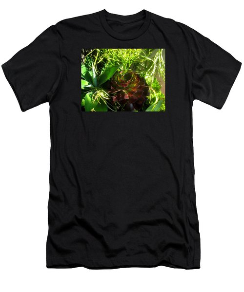 Dawning Succulents Men's T-Shirt (Athletic Fit)