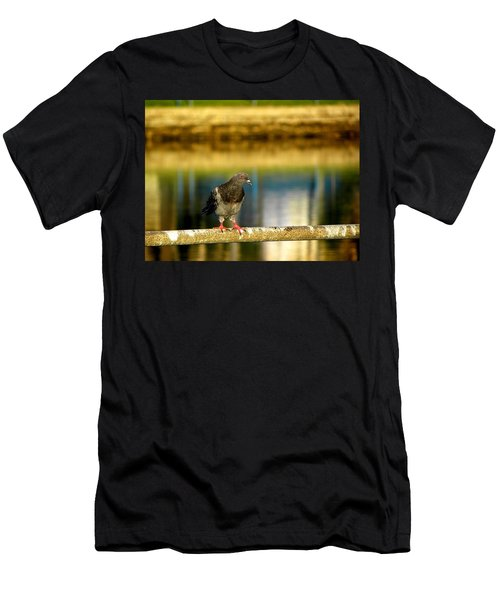 Daytona Beach Pigeon Men's T-Shirt (Athletic Fit)