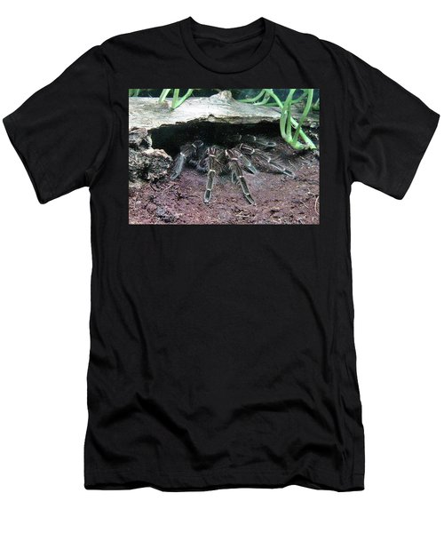Desert Tarantula Men's T-Shirt (Athletic Fit)
