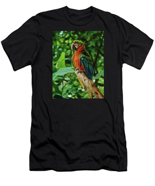 Men's T-Shirt (Slim Fit) featuring the photograph Don't Ruffle My Feathers by Marie Hicks
