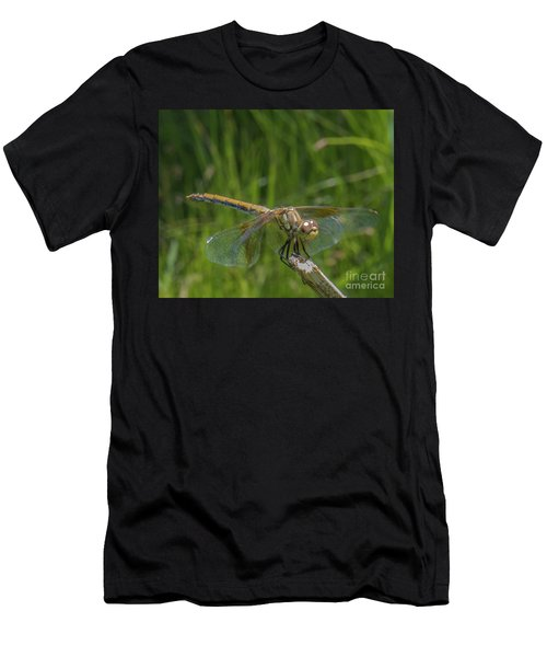 Dragonfly 7 Men's T-Shirt (Athletic Fit)