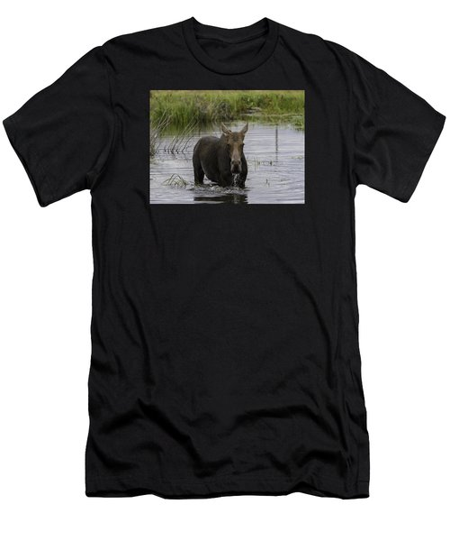 Drooling Cow Moose Men's T-Shirt (Athletic Fit)