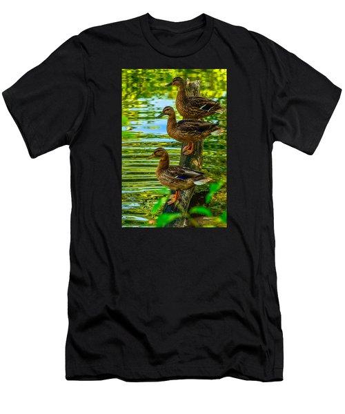 Ducks On A Log 3 Men's T-Shirt (Slim Fit) by Brian Stevens