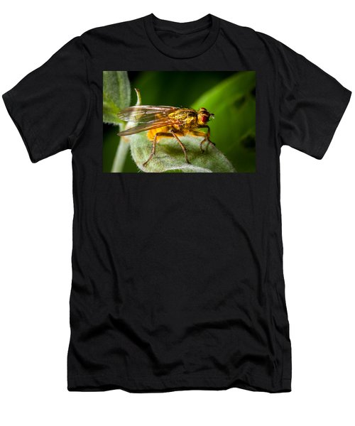 Dung Fly On Leaf Men's T-Shirt (Athletic Fit)