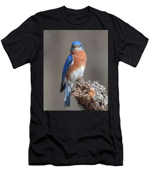 Eastern Bluebird Dsb0300 Men's T-Shirt (Athletic Fit)