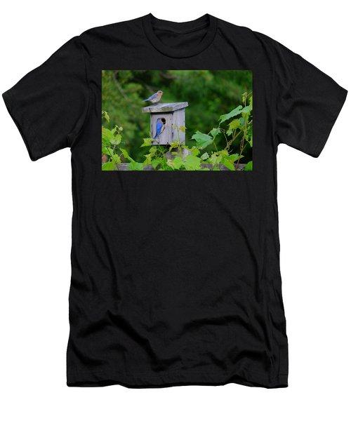 Eastern Bluebird Pair Men's T-Shirt (Athletic Fit)