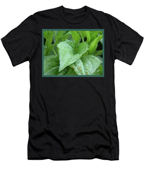 Echinacea After The Rain I Men's T-Shirt (Athletic Fit)