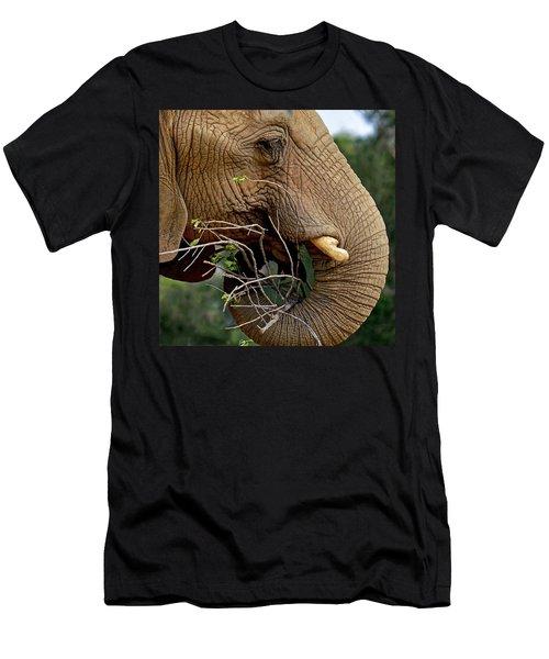Elephant Curl Men's T-Shirt (Athletic Fit)