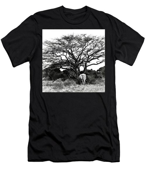 Elephant Tree Men's T-Shirt (Athletic Fit)