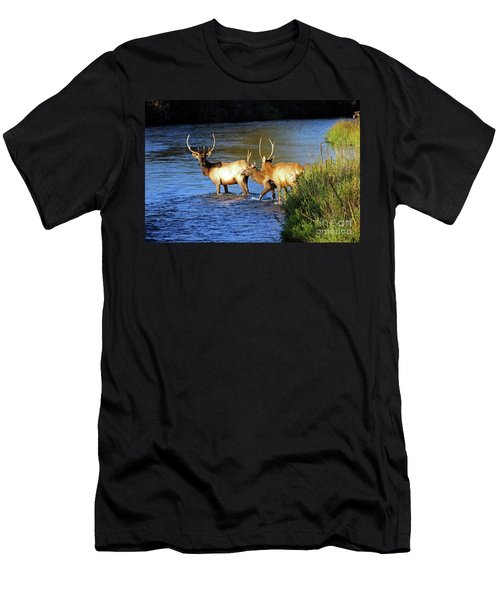 Elk Men's T-Shirt (Slim Fit) by Cindy Murphy - NightVisions