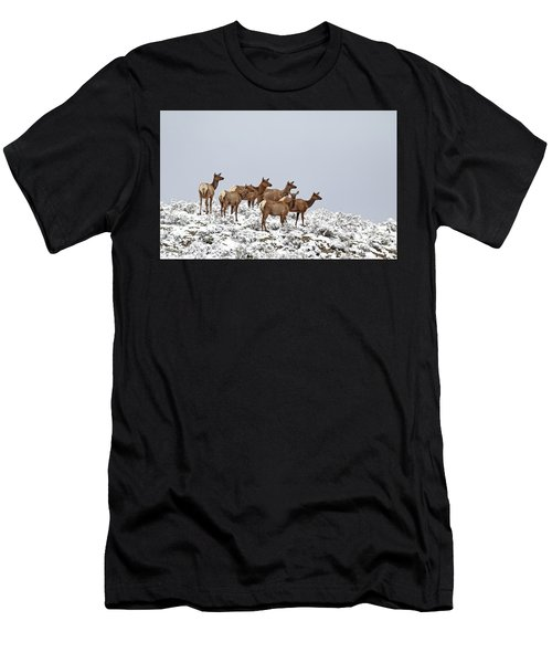 Elk Cows On The Alert In The Tetons Men's T-Shirt (Athletic Fit)