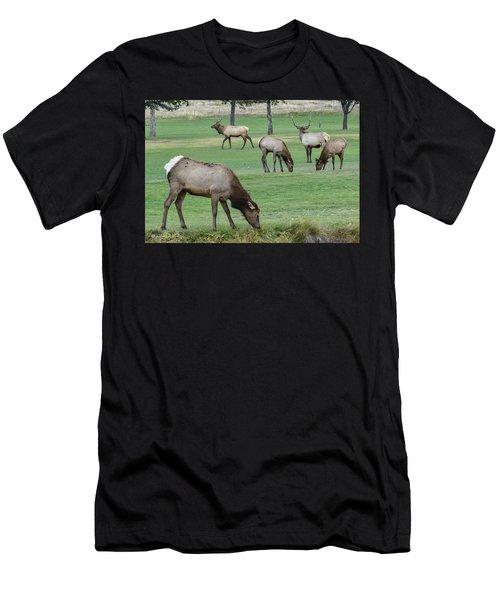 Elk On Golf Course Estes Park Colorado Men's T-Shirt (Athletic Fit)