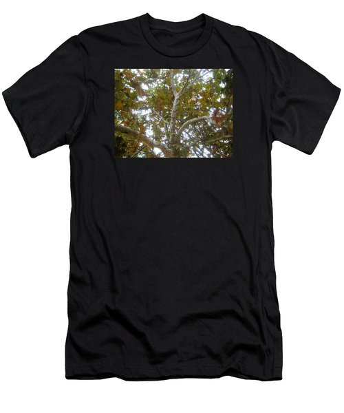Enlightened Autumn Men's T-Shirt (Athletic Fit)