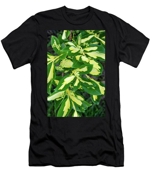 Euonymus Blondy Shrub 2 Men's T-Shirt (Athletic Fit)