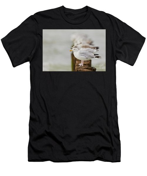 European Herring Gulls In A Row Fading In The Background Men's T-Shirt (Athletic Fit)