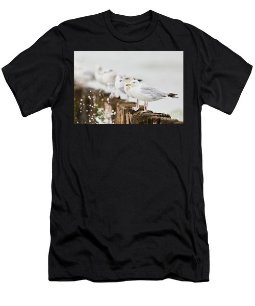 European Herring Gulls In A Row  Men's T-Shirt (Athletic Fit)
