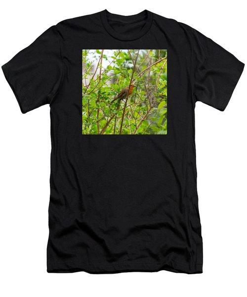 European Robin Men's T-Shirt (Athletic Fit)