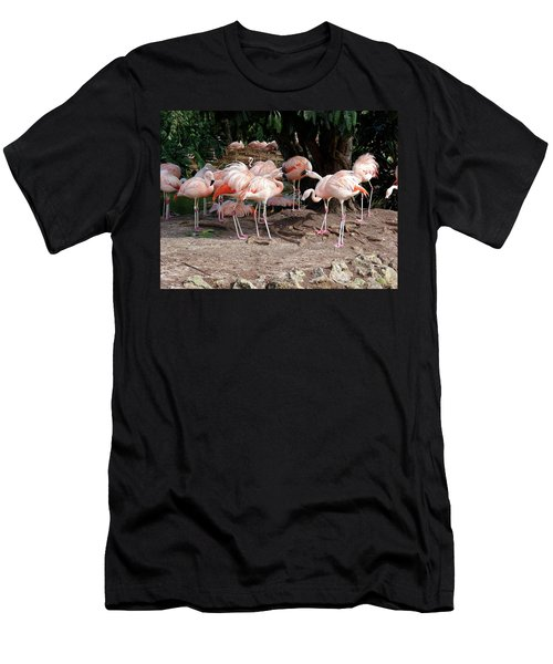 Fabulous Flamingos Men's T-Shirt (Athletic Fit)