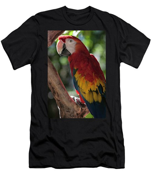 Feathered Rainbow Men's T-Shirt (Slim Fit)