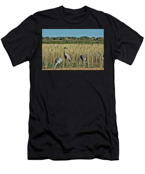 Feeding Greater Sandhill Cranes Men's T-Shirt (Athletic Fit)