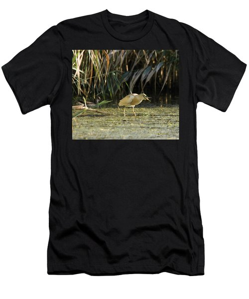 Feeding Squacco Heron Men's T-Shirt (Athletic Fit)